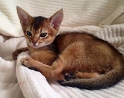 Khevin Barnes Cat